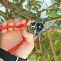 Felco 6 Gartenschere in Anwendung