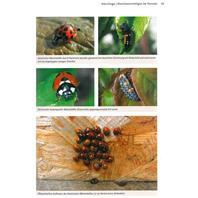 Handbuch Pflanzenschutz im Biogarten Seite 53
