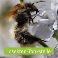 Insekten-Tankstelle