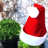 Nikolausmütze für Pflanzen