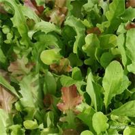 Reinsaat Salatmischung Misticanza Saatgut