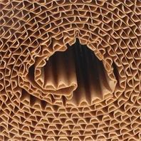 Schacht Insekten Fanggürtel Detail
