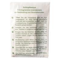 Trichogramma Schlupfwespen gegen Kleidermotten