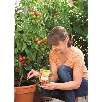 Neudorff Azet DüngeSticks für Tomaten und Erdbeeren Anwendung Kübeltomate