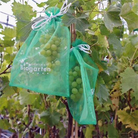 Trauben-Schutztaschen von Andermatt Biogarten in Anwendung