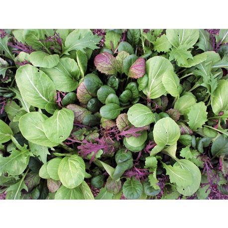 Reinsaat Asia-Salatmischung