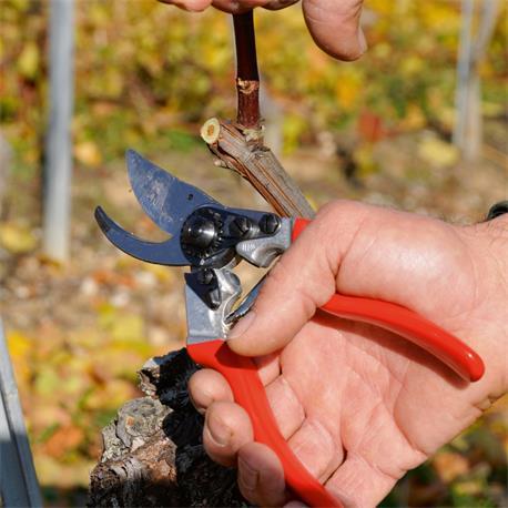Gartenschere Felco 8 in Anwendung