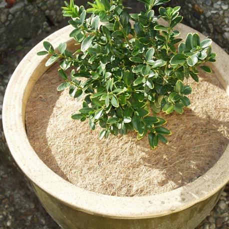 Kokosscheibe für Töpfe