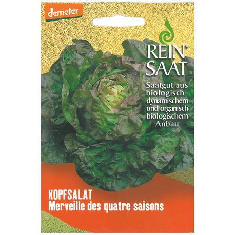 Reinsaat Kopfsalat Merveille des quatre saisons