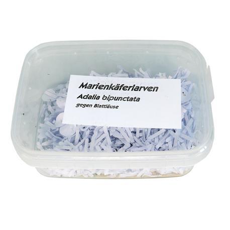 Marienkäfer-Larven Adalia Verpackung