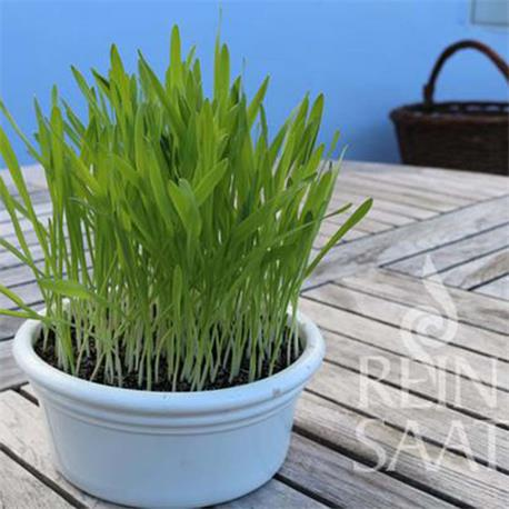 Reinsaat Smoothie-Gras