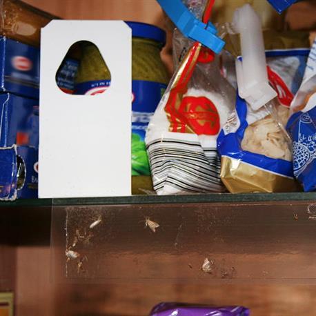 Schlupfwespen Nützlinge gegen Speisemotten