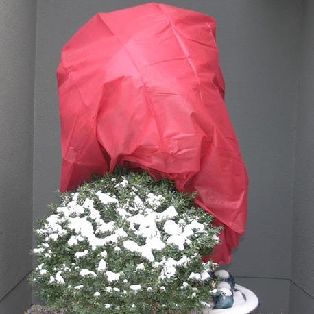 Wintervlies rot