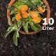 Bio-Erde für Mediterranpflanzen und Palmen