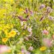Blumenwiese aus Neudorff WildgärtnerFreude Bienengarten