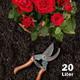 Bio-Erde für Rosen