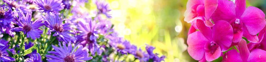Balkonpflanzenpflege kaufen