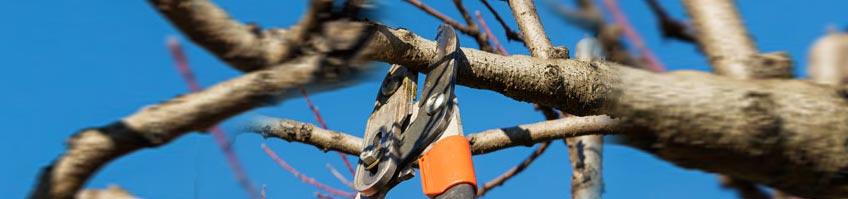 Winterpflege bei Bäumen