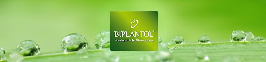 Biplantol kaufen