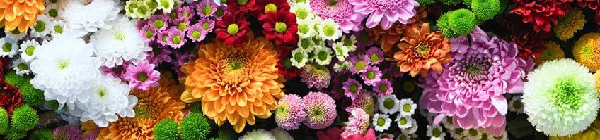 Blühpflanzen kaufen
