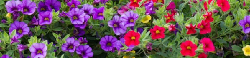Balkonpflanzendünger kaufen