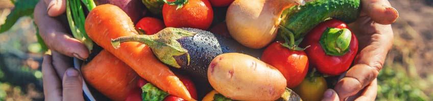 Gemüsedünger kaufen