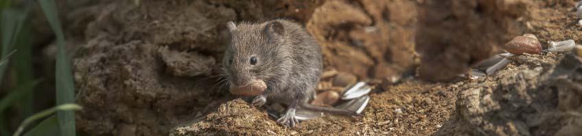Mäuse & Ratten kaufen