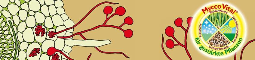 Mykorrhiza & Mykorrhiza-Pilze kaufen