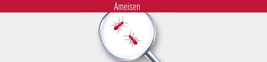 Produkte gegen Ameisen kaufen