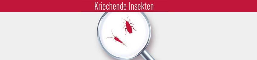 Produkte gegen kriechende Insekten kaufen