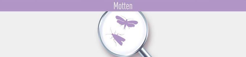 Produkte gegen Motten kaufen