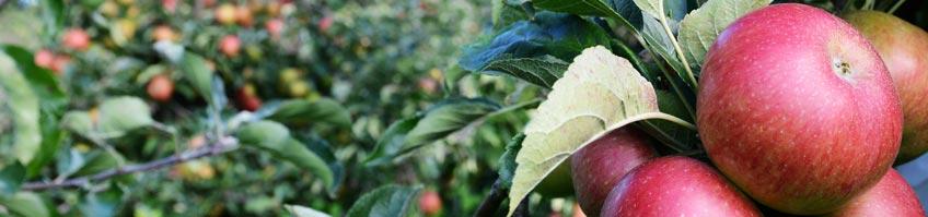 Obstgarten kaufen