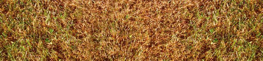 Trockenschäden im Rasen