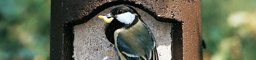 Nistkästen für Vögel kaufen