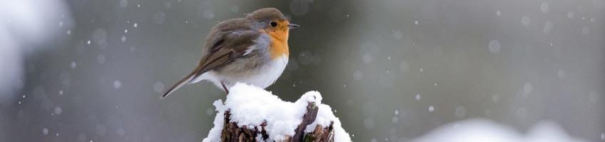 Winterfütterung von Vögeln kaufen