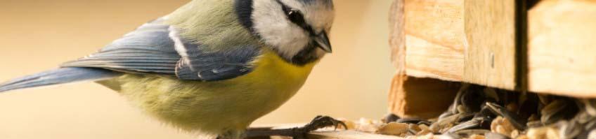 Vogelfutterhäuschen kaufen
