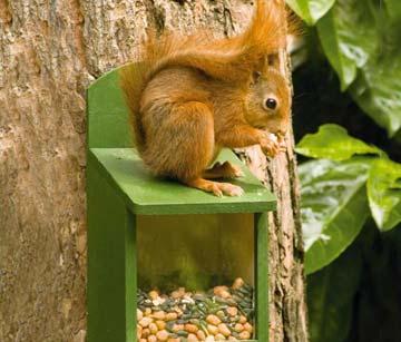Produkte für Eichhörnchen