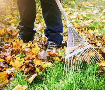 Herbstlaub kompostieren
