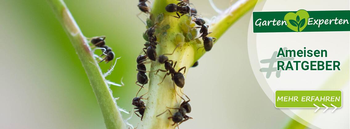 Der Ameisen Ratgeber