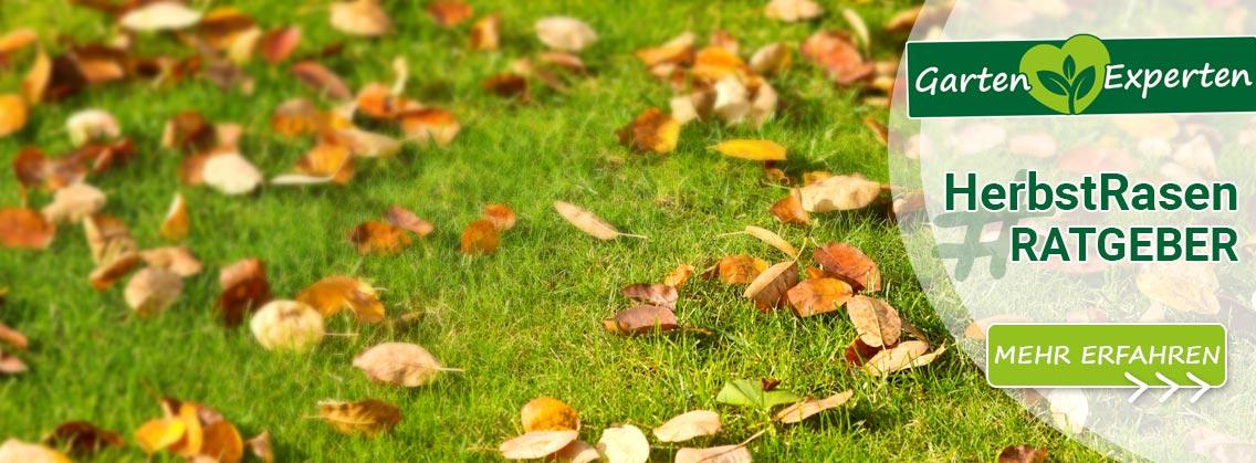 Herbstrasen Ratgeber & Rasenpflege-Tipps