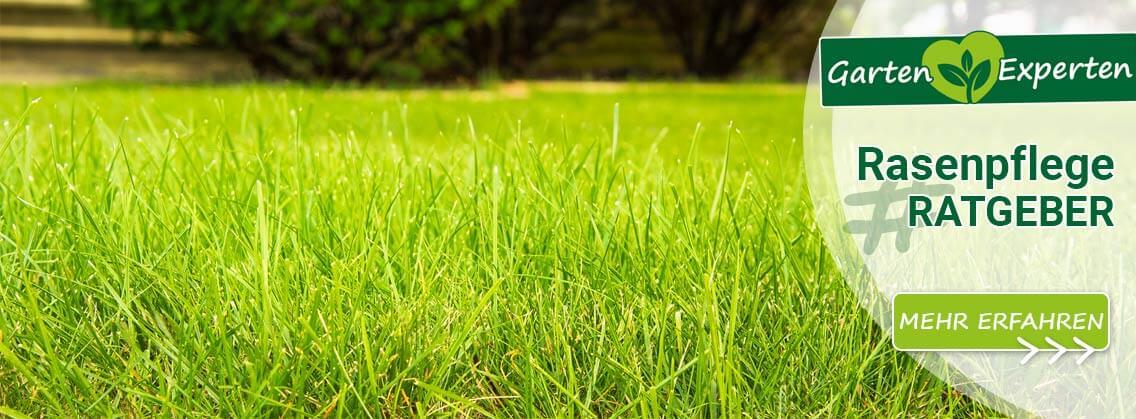 Ratgeber Rasenpflege