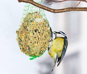 Vögel Wintterfütterung